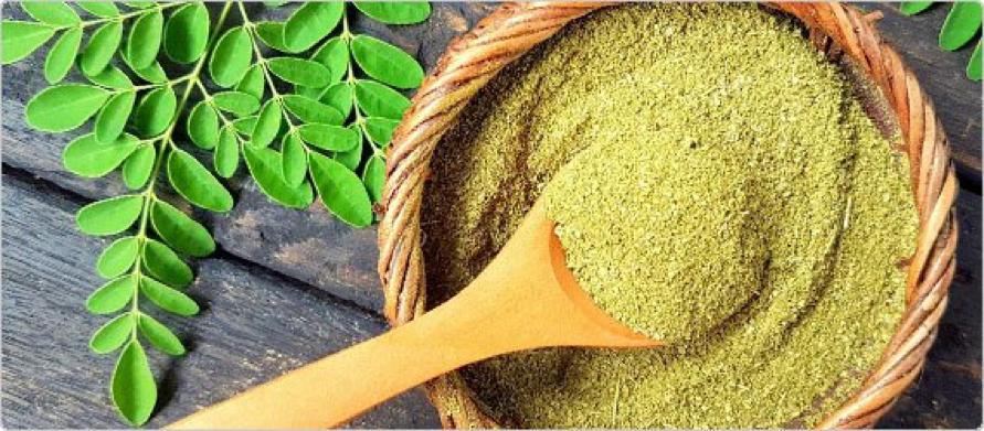 what is moringa, moringa powder, moringa supplement, moringa benefits, moringa tree, moringa leaves